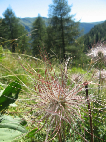 Natura (Foto Emanuele Cinelli)