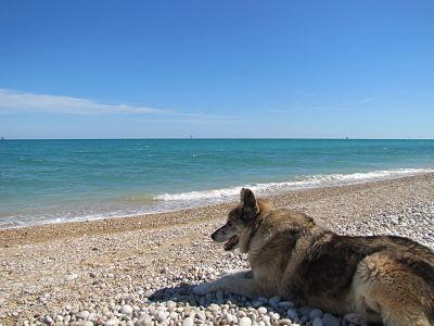 Drago contempla le onde.