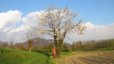 In campagna poco prima del tramonto. «Primavera dintorno. Brilla nell'aria, e per li campi esulta»