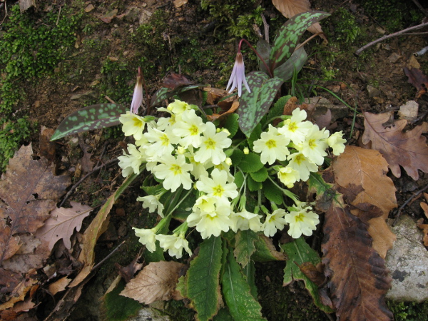 Incontro floreale sul Senter Brusàcc